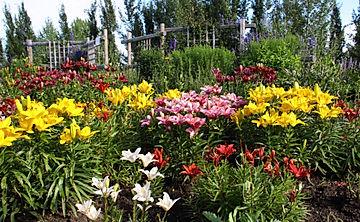 Oval Garden, Botanical Gardens of Silver Springs, lillies, garden, flowers