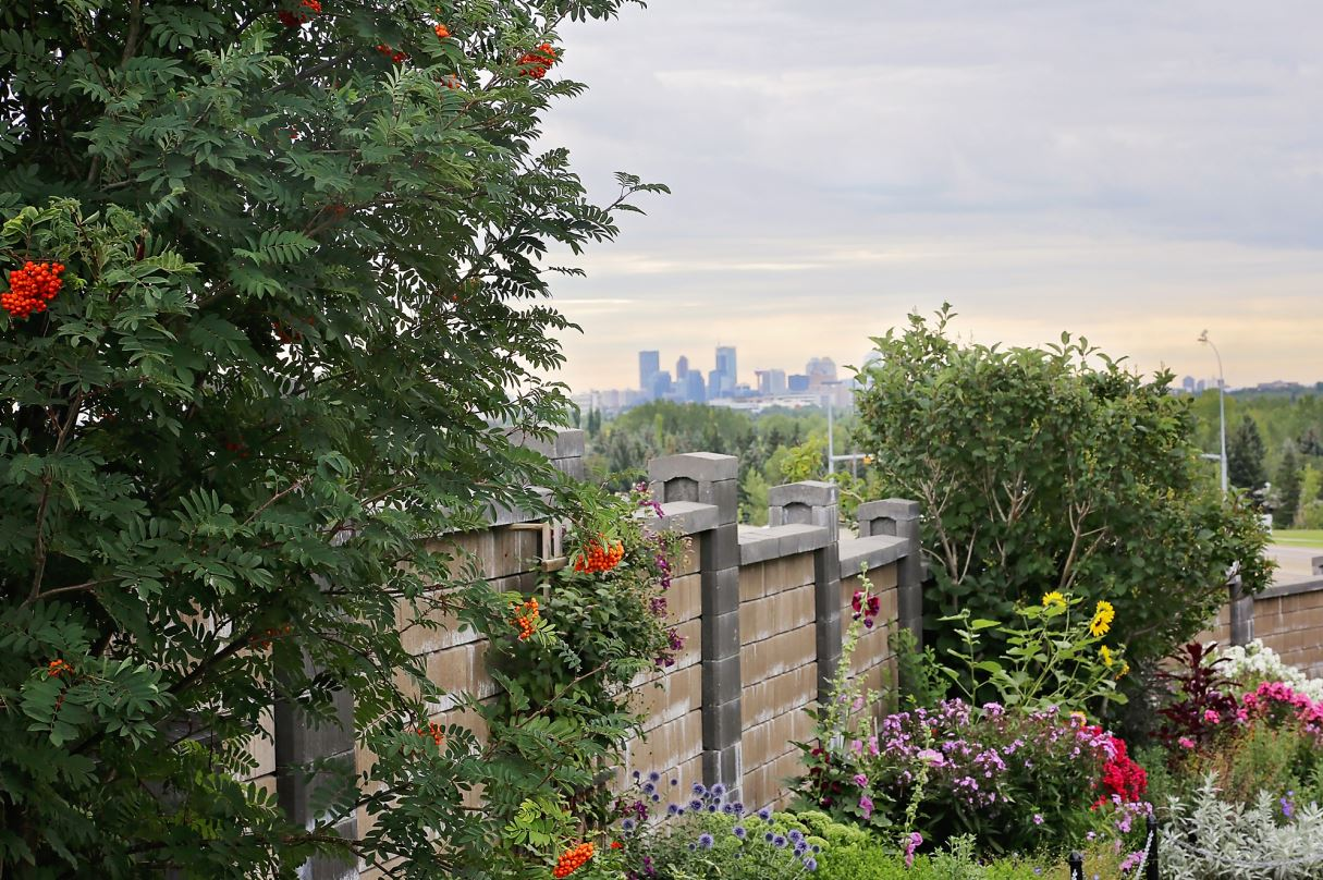 Wall Garden and Calgary skyline