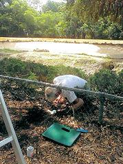Zoo Miami Orchid Crew