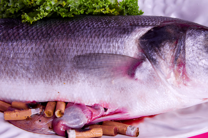 Fish close up abject.jpg