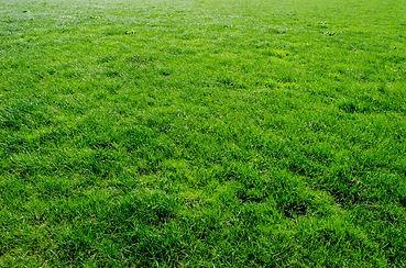 green-grass-1409668389pfD.jpg