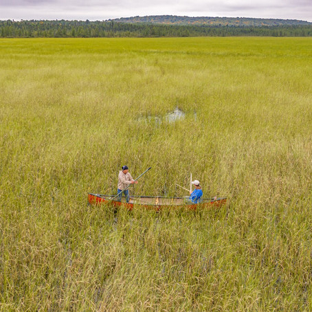 Fox Family Feature: Sokaogon Chippewa Community