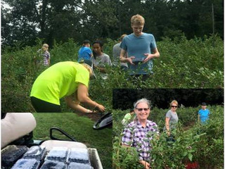 Shoutout: Helping pick for our local food pantry