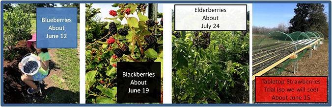 Banner of Fruit.jpg