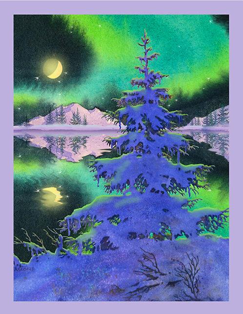 Spruce With Aurora