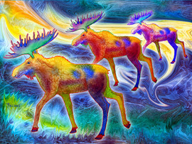 Moose Mystique