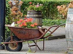 Garden-Blossom-Flower-Deco-Bloom-Decoration-1729405
