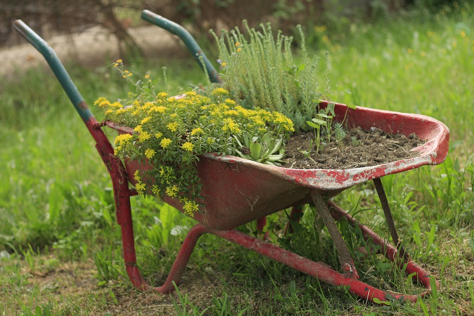 Wheel-barrow-Wheelbarrow-Wheel-Flower-Garden-1168587