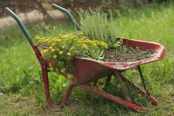 Wheel-barrow-Wheelbarrow-Wheel-Flower-Garden-1168587