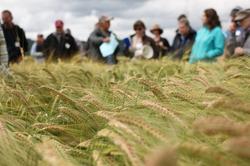 Barley Day