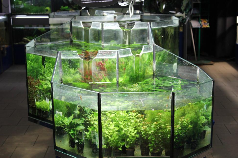 Unsere Aquaristik