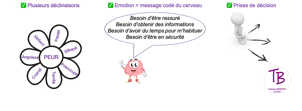 emotions   cerveau    coaching    neurosciences   