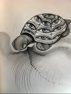 Tortoise-eye1-800x426.jpg