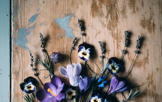 årets första blomsterbild