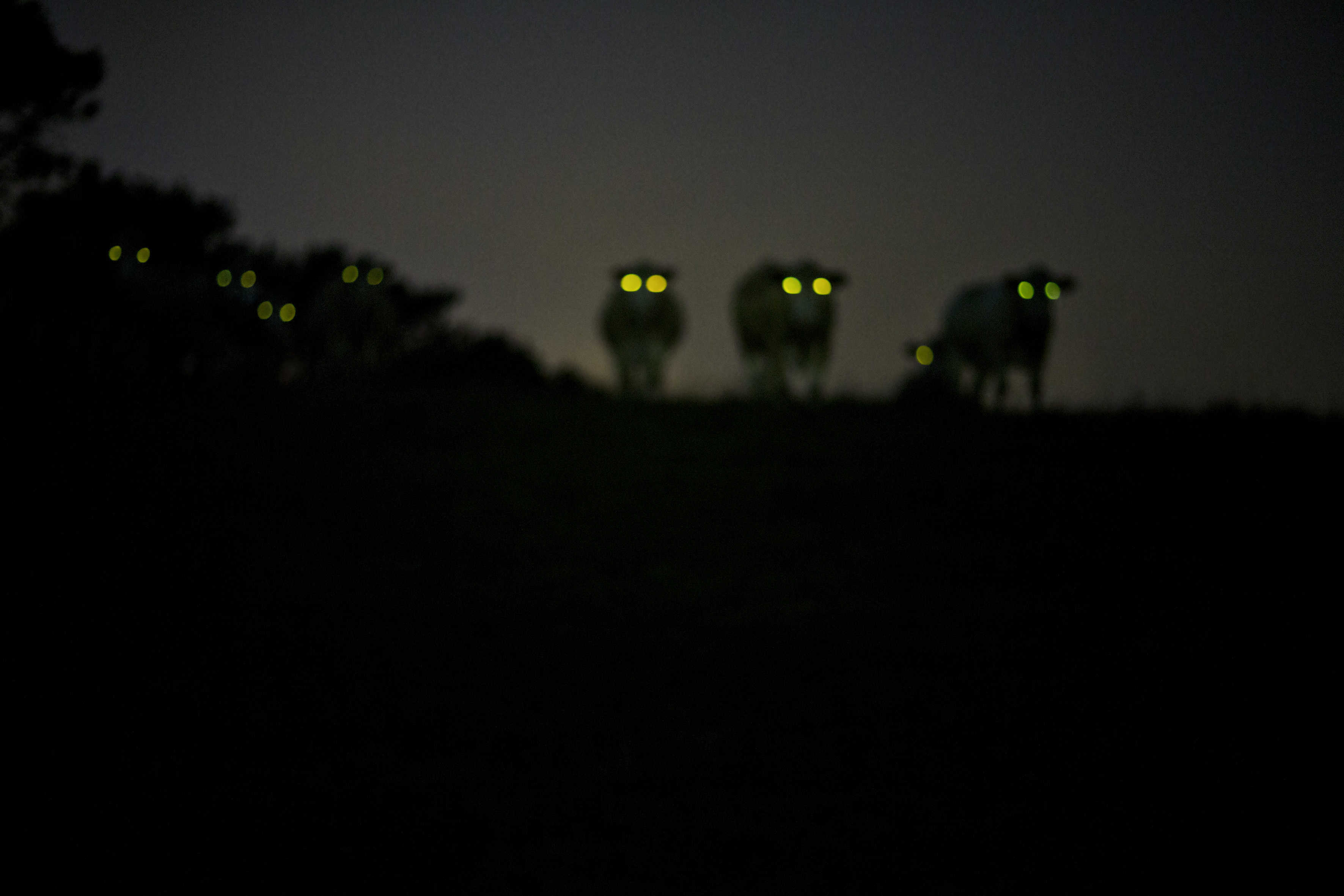 Creatures-of-the-Night-3_2012