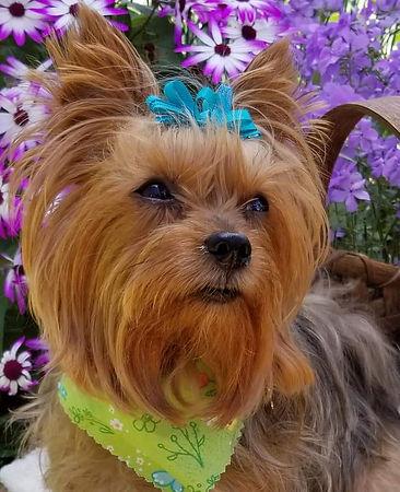 Daisy Grace2.jpg