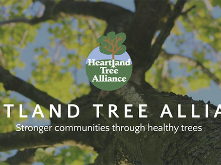 Free Trees for KCMO Residents