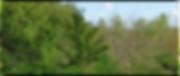 Skovrejsning