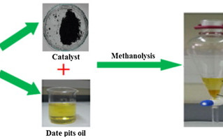 Valorization of waste Date pits biomass for biodiesel production in presence of green carbon catalys