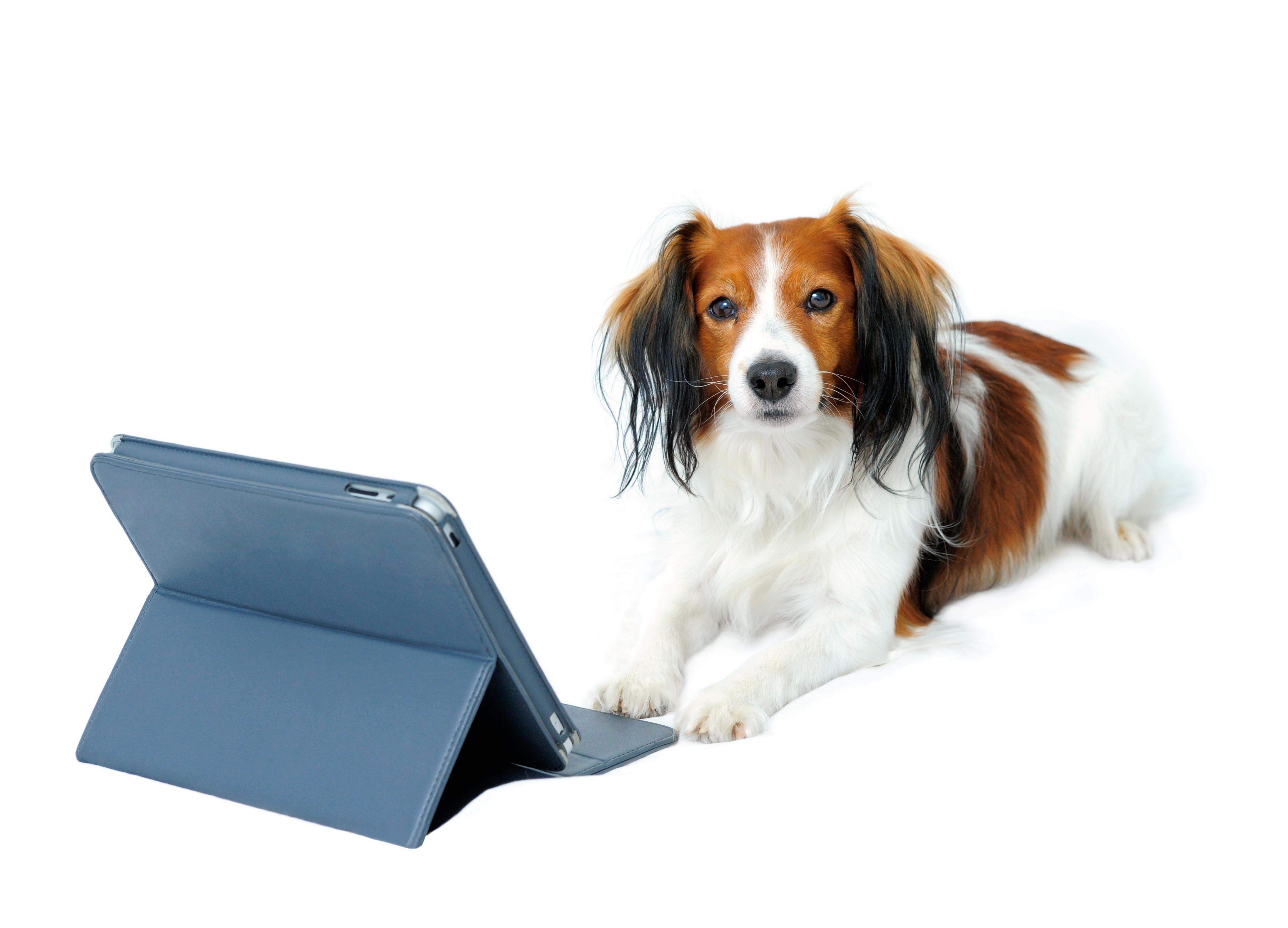 1 on 1 Online Training - Basic Skills