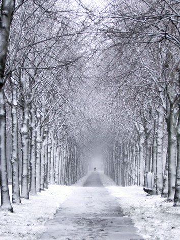 winter-trail-wallpaper-1.jpg