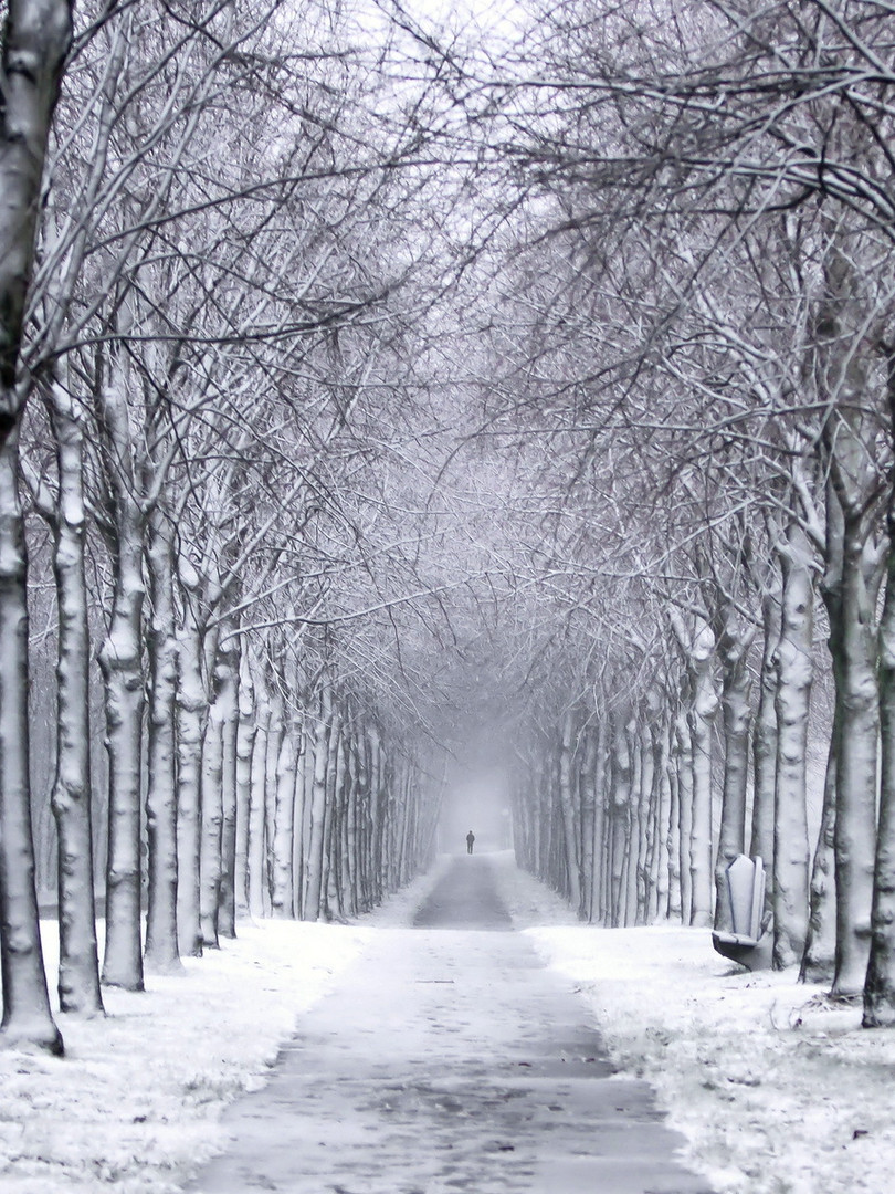 winter-trail-wallpaper-1.jpg