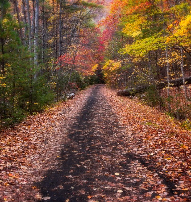 Virginia-Trail.jpg