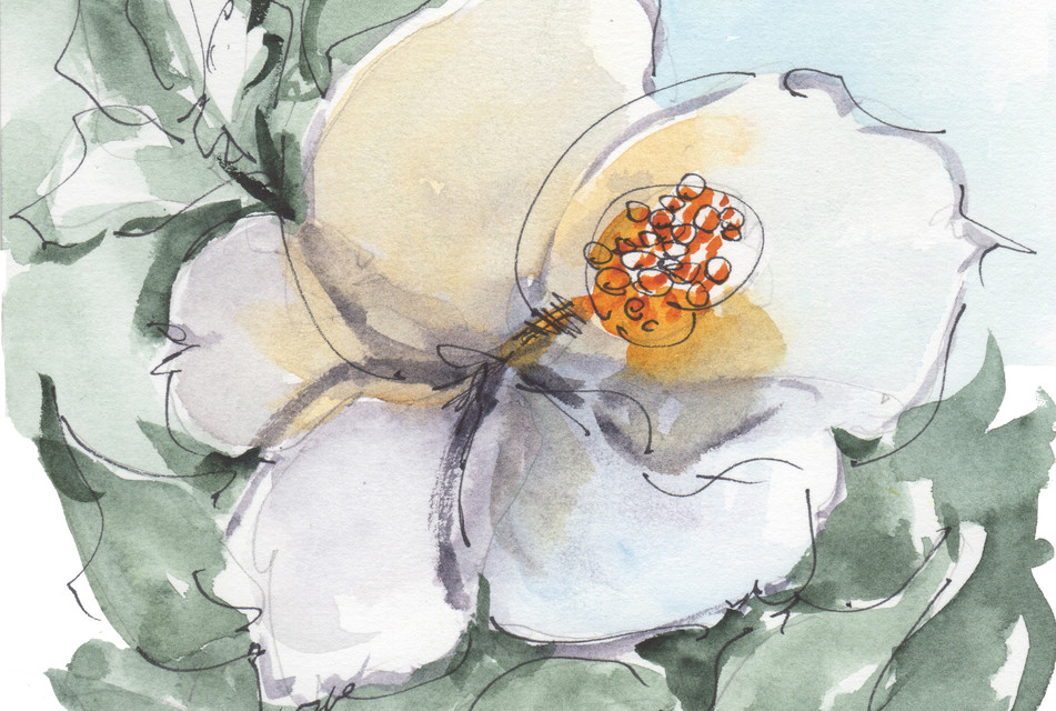 HU FL124 Fragrance of Magnolia KMcElwaine.jpg