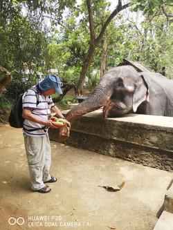 מקלט פילים