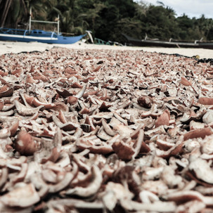 Dry coconnut.