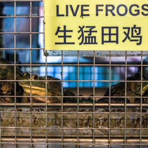 Wanna frog for dinner?