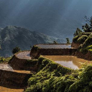 Close up to Sapa rice terraces.