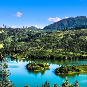 Breathtaking tea plantations view