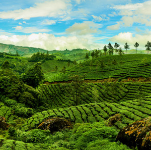 Incredible view during our trekking throughout the tea plantations.