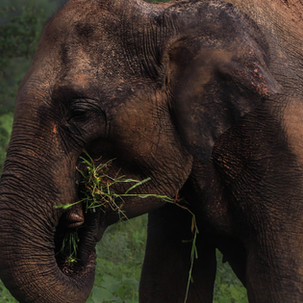 Elephants eat more than 150 kg per day.