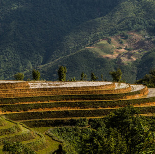 Mountains, green and brown rice terraces.