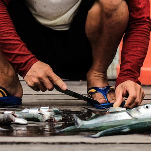Preparing the fish.