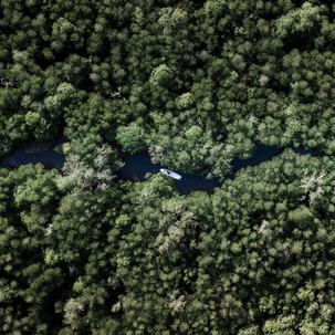 Bird-eye-view to Mangrove forest.