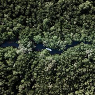 Bird-eye-view to Mangrove forest.