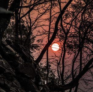Red sun and trees branches.