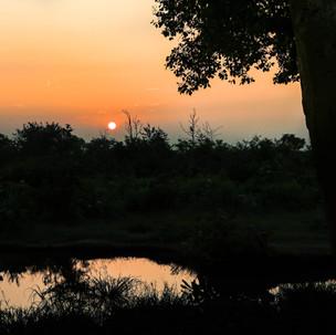 Sunrise at Udawalawe National Park.