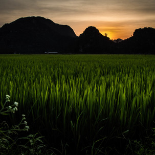 Sunset from the rice fields.