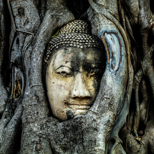 Buddha Head in Tree Roots, Wat Mahathat, Ayutthaya.