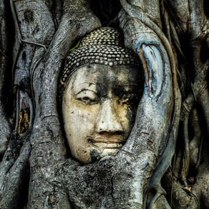 Buddha Head in Tree Roots, Wat Mahathat, Ayutthaya.