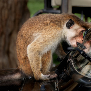 Monkey astonished by his reflex.