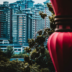 Green trees, tall buildings and Chinese lamps.