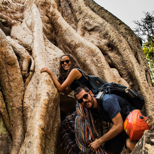 Giangatic tree roots.