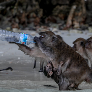 They drink like people.