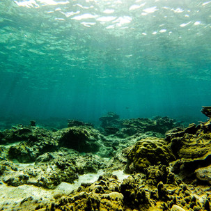 Take a look deep in the ocean.