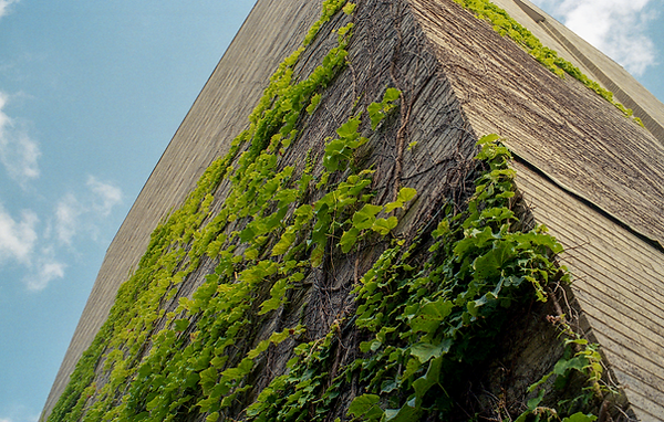 ivy wall.png